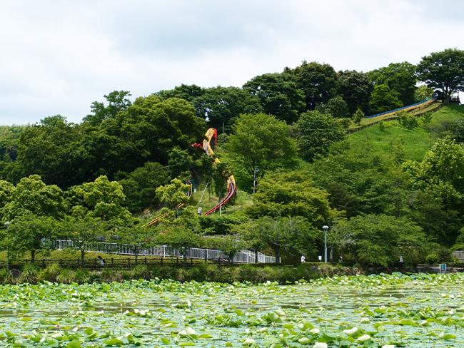 蓮華寺池公園のすべり台